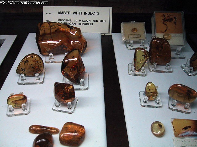 Geological Museum: Rare collector quality amber with insects. (click for next photo)