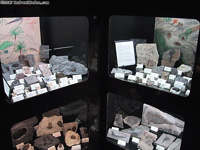 Geological Museum: Exhibits. 100s of millions of years ago. (click for next photo)