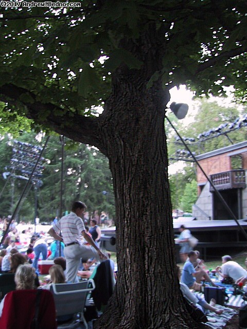 Shakespeare on the Green: Tree. (click for next photo)