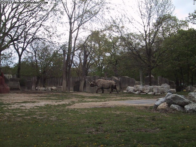 Brookfield Zoo. (click for next photo)