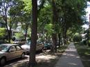 Garden Walk. Tree lined street. (click to zoom)