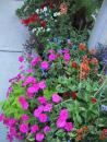 Garden Walk. Happy street flowers. (click to zoom)