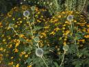 Andersonville: Thistles and dandelions. (click to zoom)