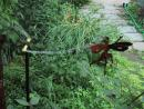 Andersonville: Sprinkler and brass fairy. (click to zoom)
