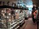 Dave's Rock Shop: Broad view from rear. (click to zoom)