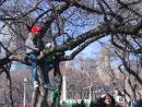 Saint Patrick's Day parade: Kids in trees. (click to zoom)