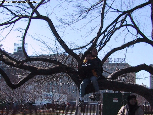 Saint Patrick's Day parade: Kids in trees.