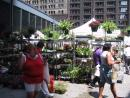 Farmers Market. (click to zoom)