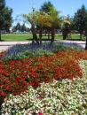 Navy Pier: Flowers. (click to zoom)