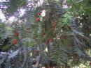 Morton Arboretum. (click to zoom)