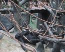 Brookfield Zoo. (click to zoom)