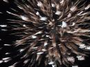 Excellent independence day fireworks in Vernon Hills. (click to zoom)
