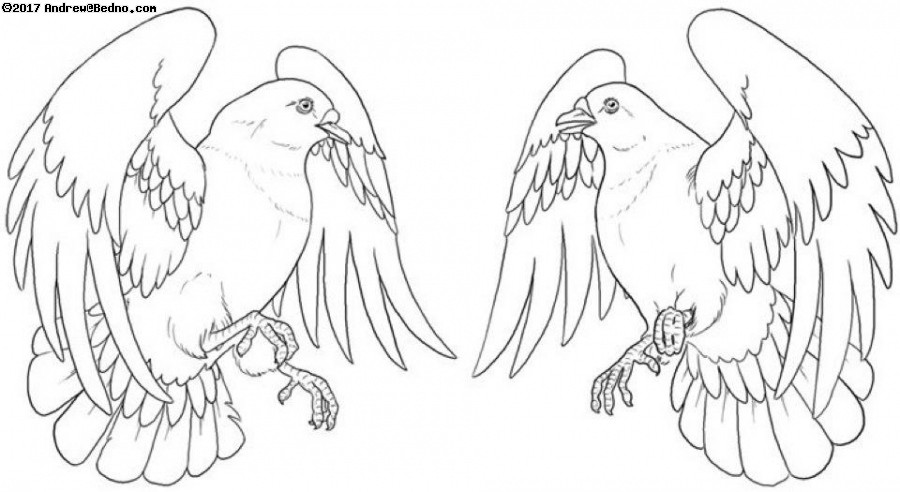 Jera's Pigeon Tattoos (click for next photo)
